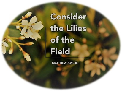 Rounded Lillies of the Field
